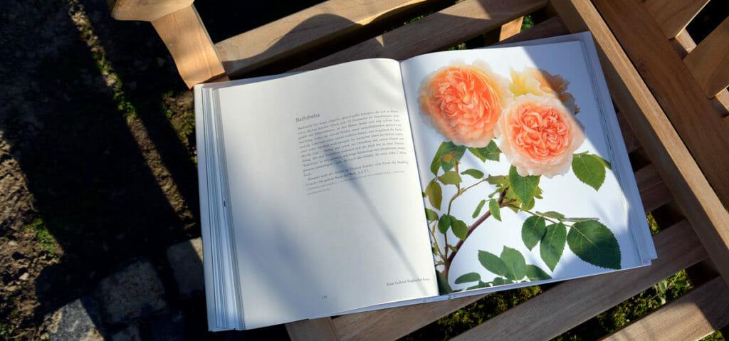 David Austin, Faszination englischer Rosen