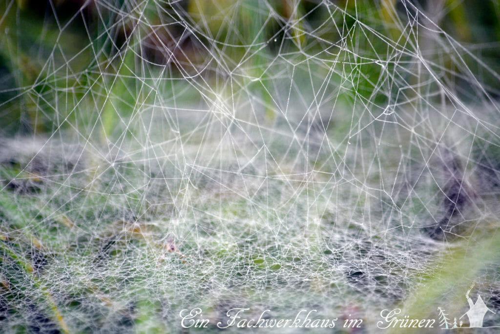Sehr unordentliche Spinnennetze.