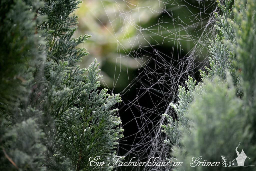 Spinnweb, Spinnweben