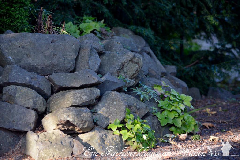 Trockenmauern bieten Lebensraum für viele Tiere.