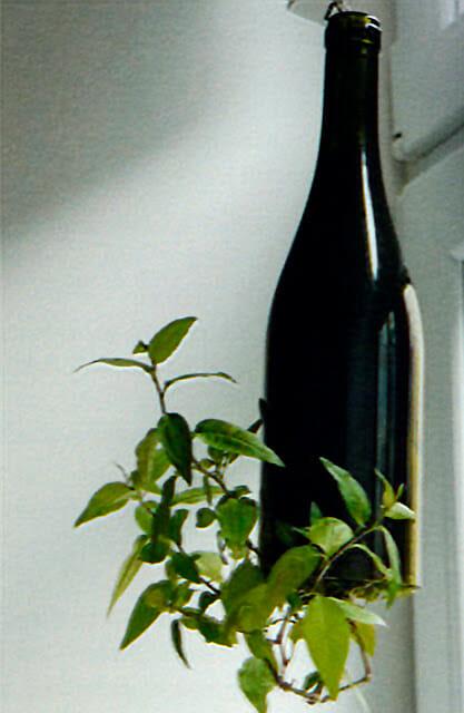 Bio-Gärtnern am Fensterbrett, Löwenzahn Verlag