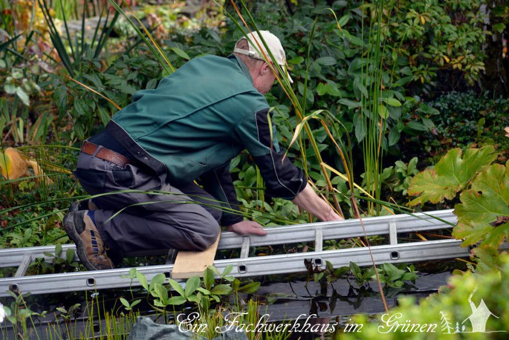 Mit einer Leiter kann man den Gartenteich sehr gut säubern.