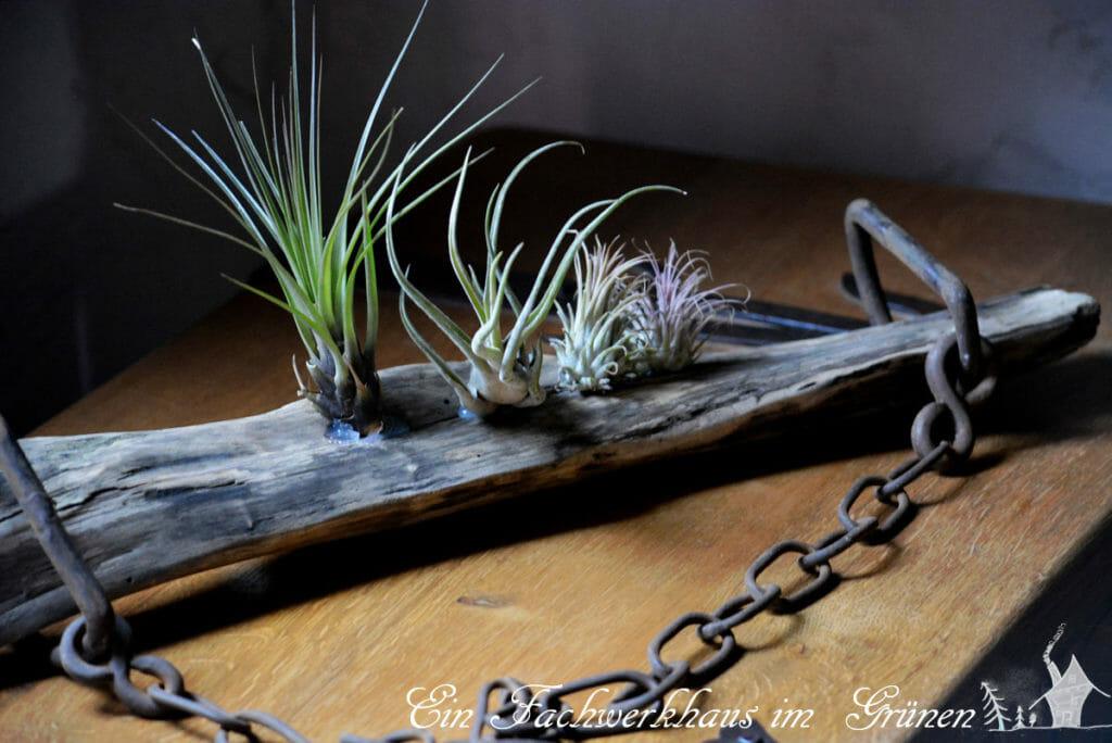 Tillandsien, Deko, DIY, Gartenblog