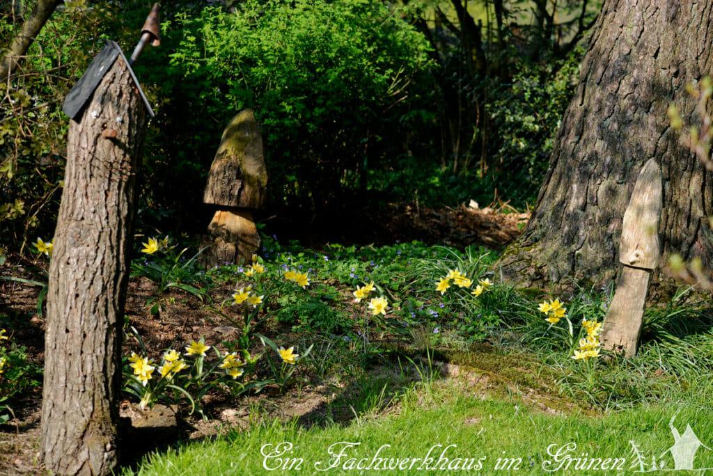 Tulipa Tarda, Gartenblog