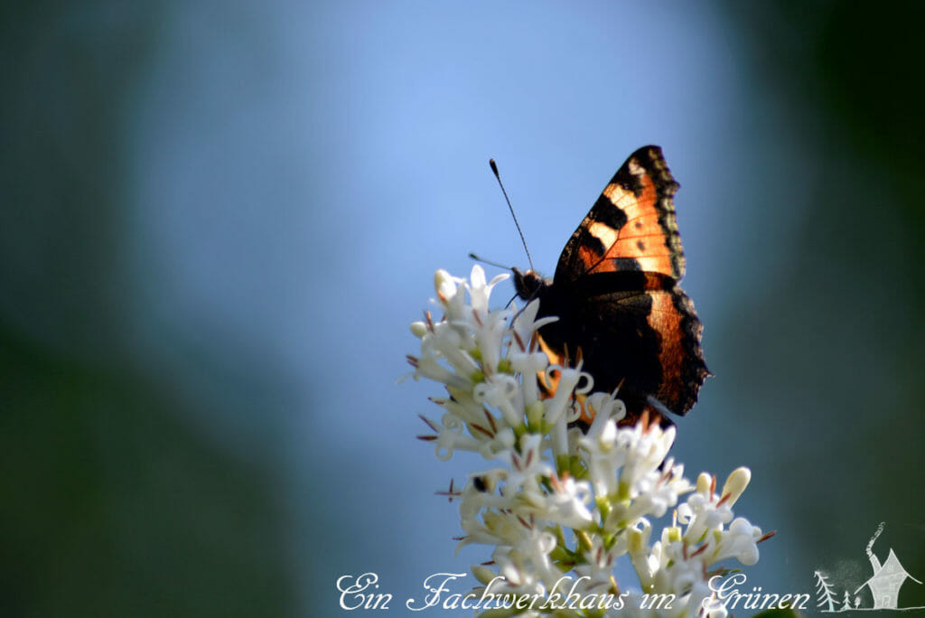 Schmetterlinge gehören zu unseren Lieblingen.