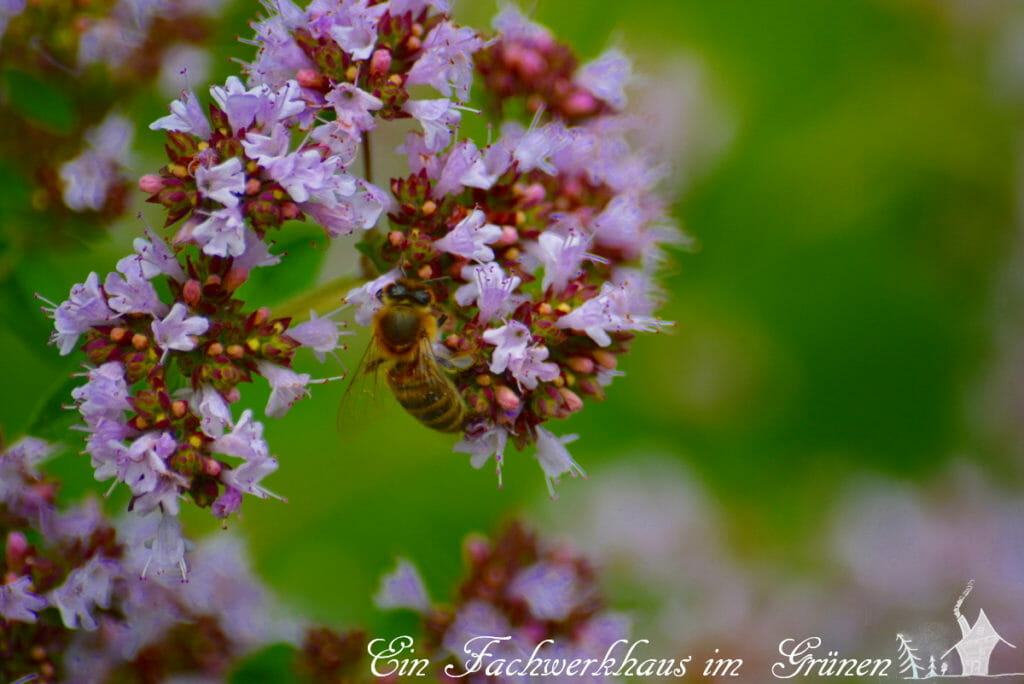 Eine Biene macht sich an einem Bienenmagneten zu schaffen.