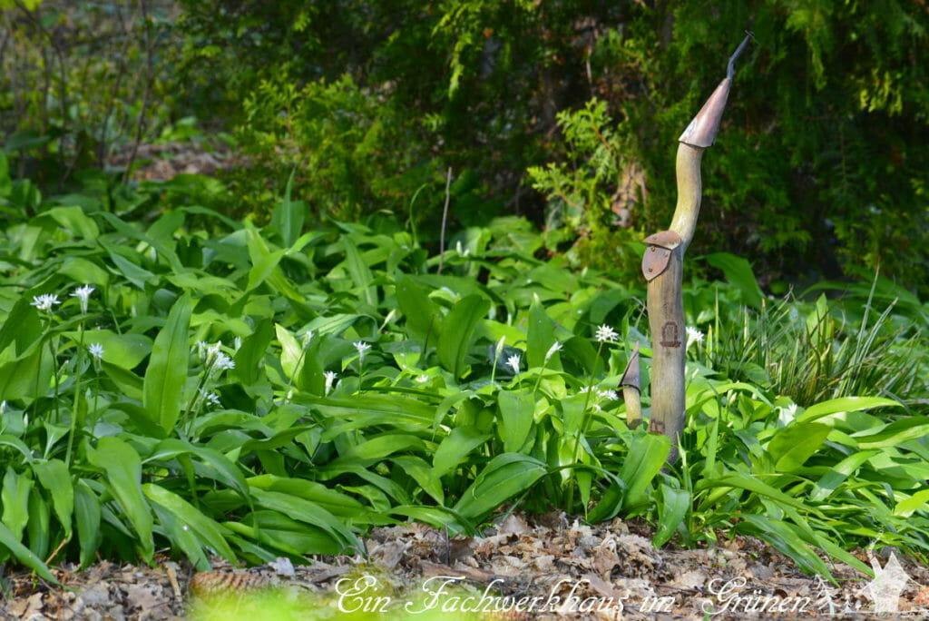Der Bärlauch im Garten im April