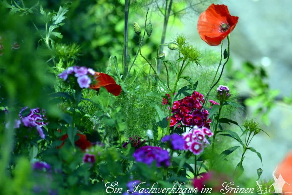 Abhauen in den Garten, das Abenteuer des Lebens.