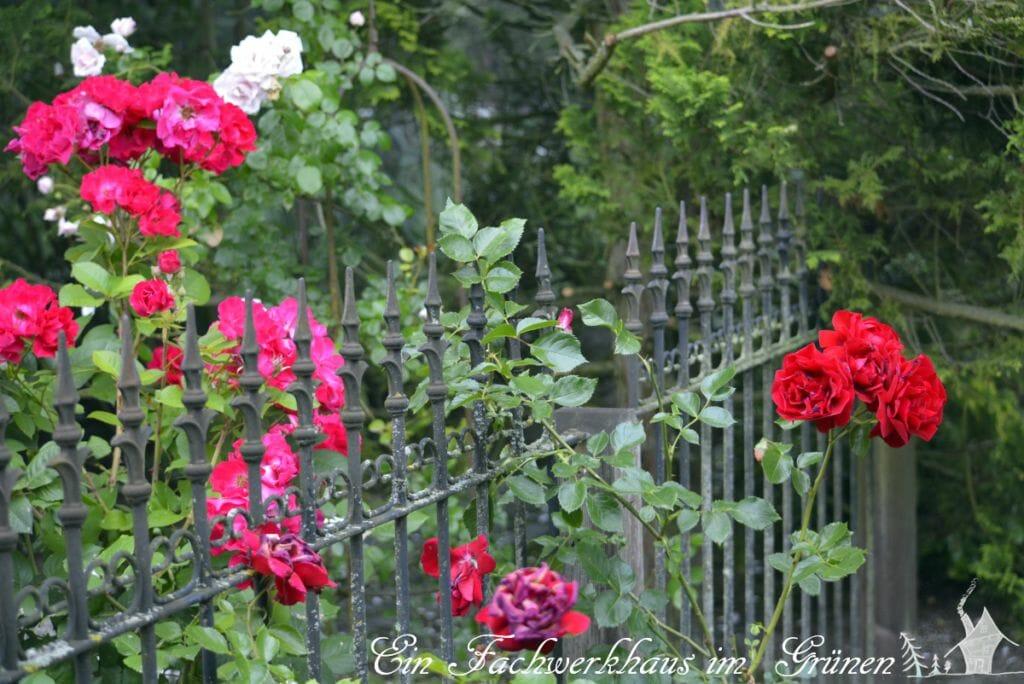 Auf einer Seite wird der Rosengarten durch einen Zaun begrenzt.