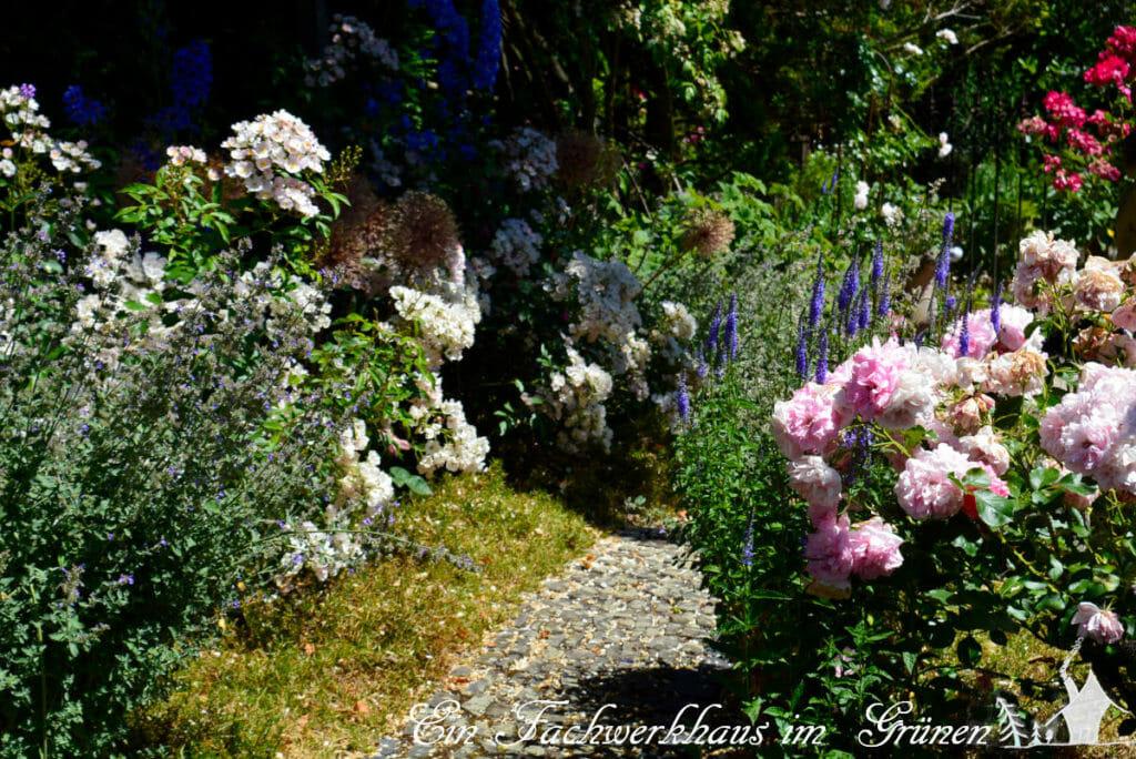Der Weg durch den Rosengarten.