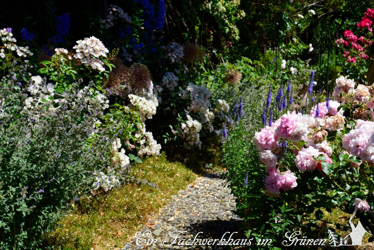 Der Rosengarten als Teil unseres Gartens.