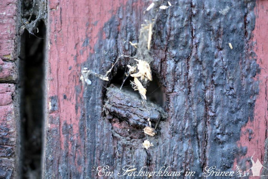 Ein Holznagel muss ausgetauscht werden.