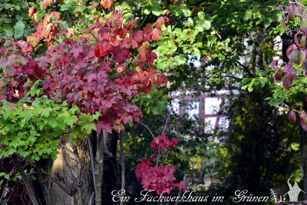Der Herbst malt den Garten neu.