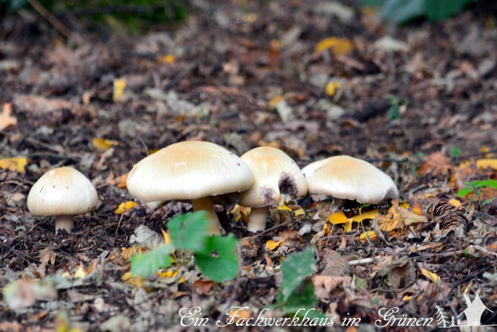 Pilze in unserem Garten.