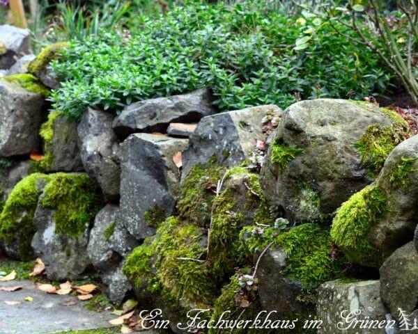 Trockenmauer - Ein Lebensraum für Tiere
