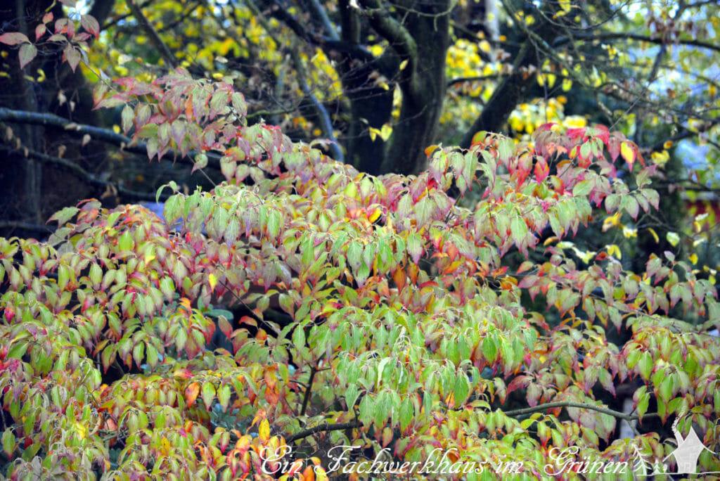 Der Gatrten haut sich auf's Ohr. Man sieht es daran, dass sich die Blätter langsam verfärben.