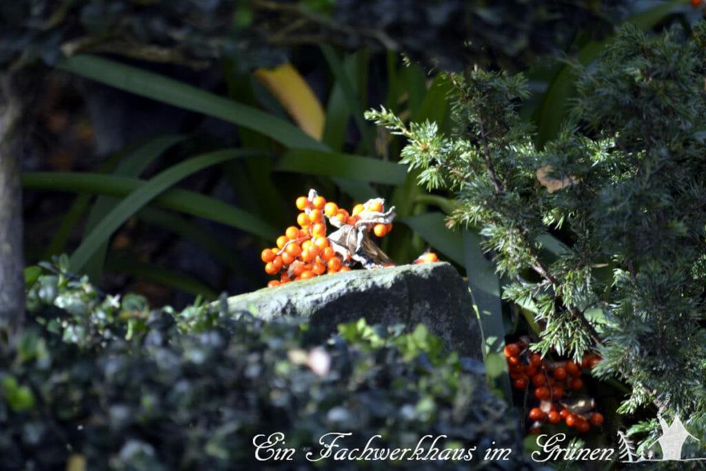 Die Iris foetidissima sorgt für Abwechslung im herbstlichen Garten.