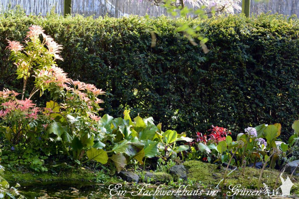 Den Garten gestallten. Eine Eibenhecke bildet die Grenze zum Rosengarten.