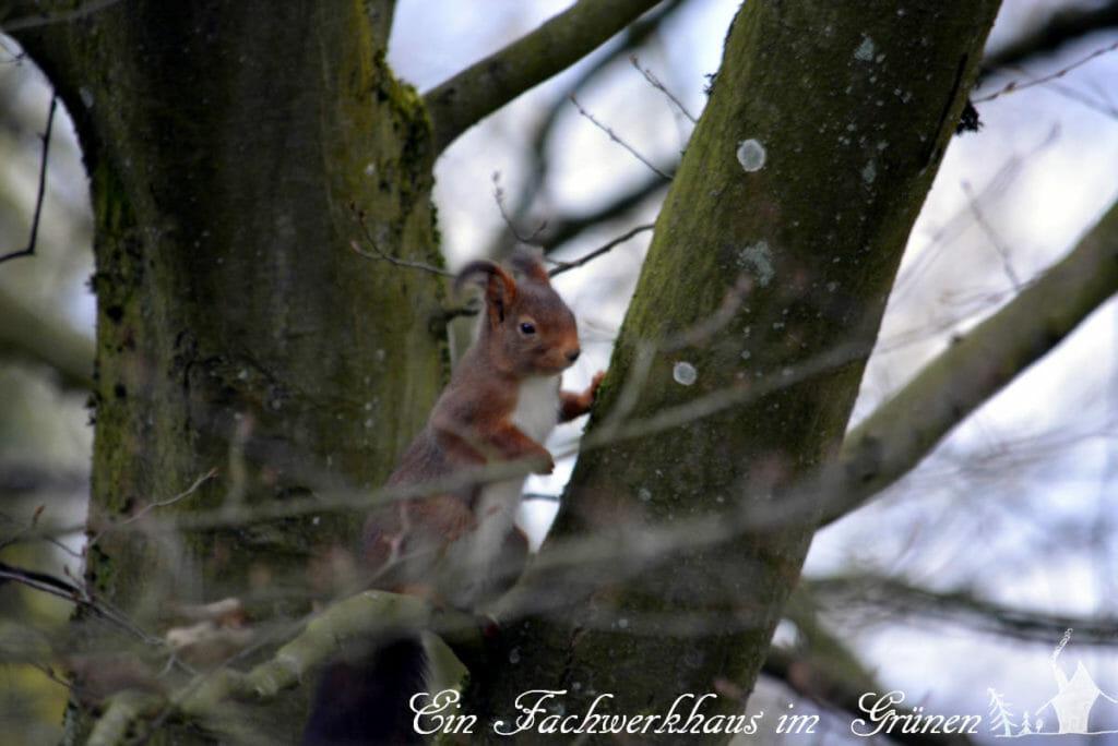 Ein Eichhörnchen betrachtet die Türme. Wie mir scheint, sehr kritisch.