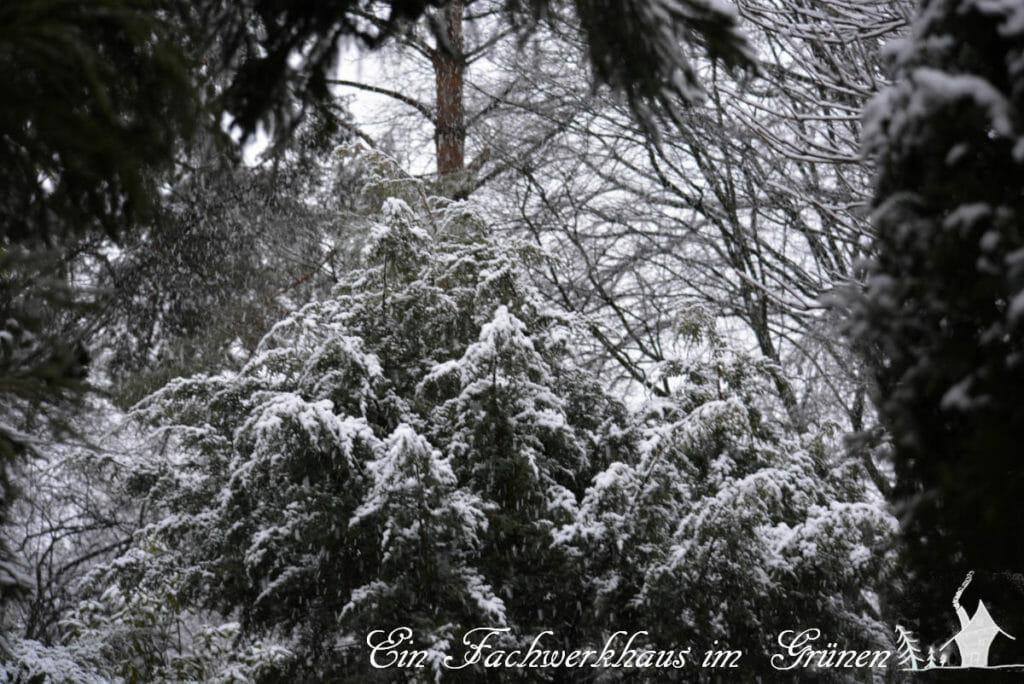 Der Winter in unserem Garten. Nur ein Tag lang lag Schnee.