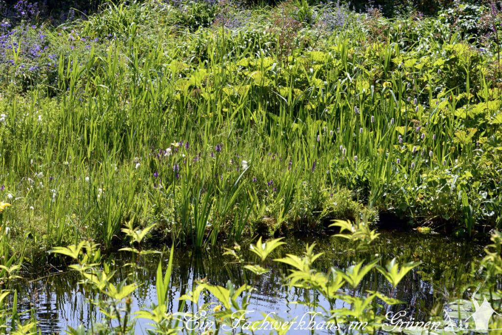 Ein sehr naturnaher Teich im Garten von Manfred Lucenz und Klaus Bender.