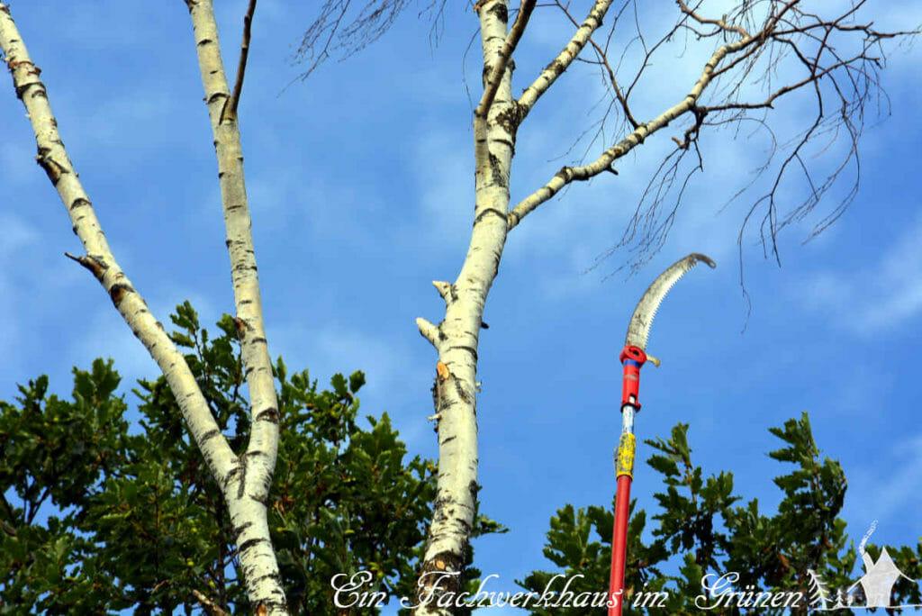 Die Birke musste leider gefällt werden. Wieder ein Baum weniger im Garten.