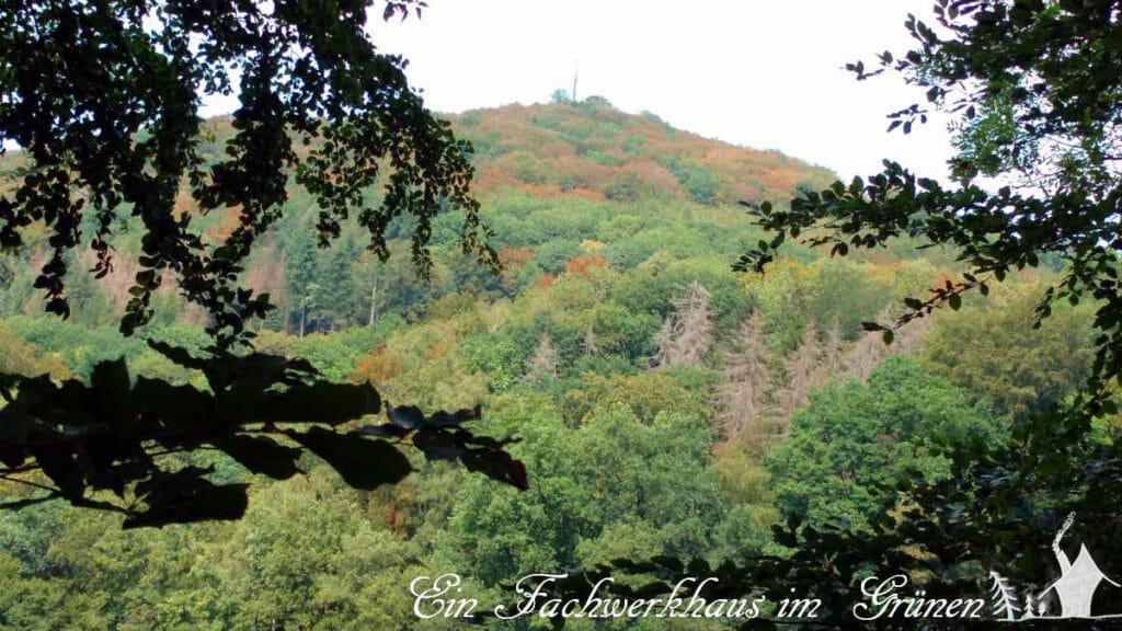 Die Dürre frisst den Wald. Hier sieht man den Ölberg im Siebengebirge.