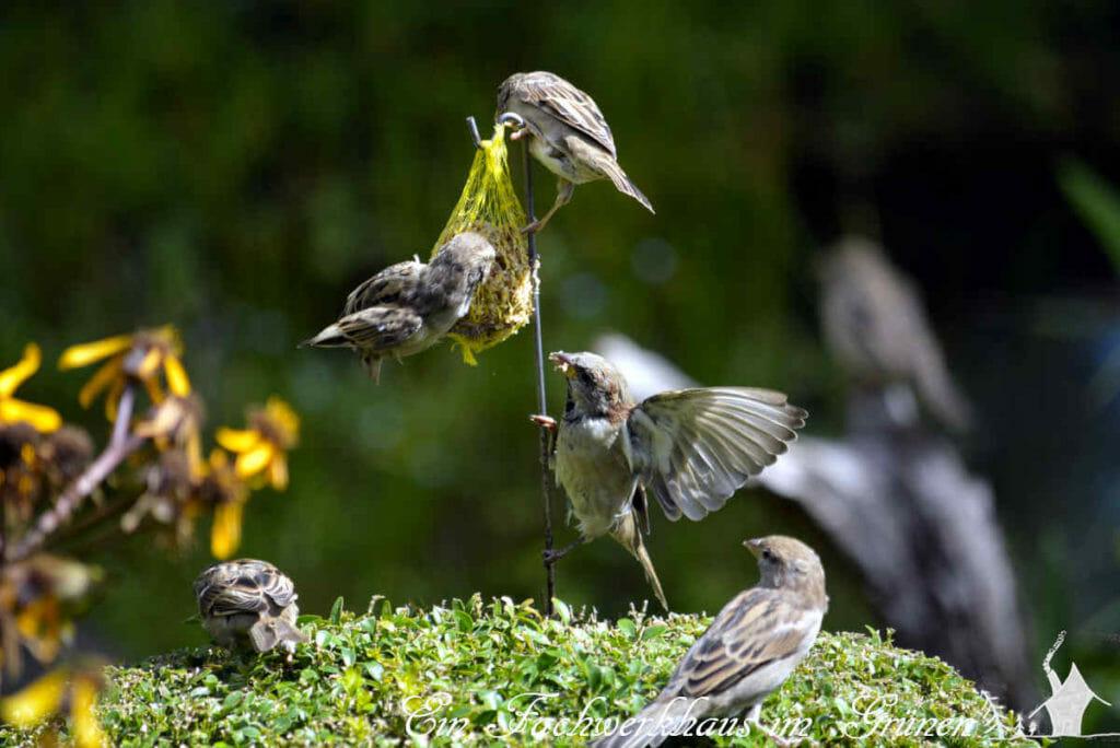 Die Vögel in unserem Garten nehmen die Maisenknödel sehr gut an.