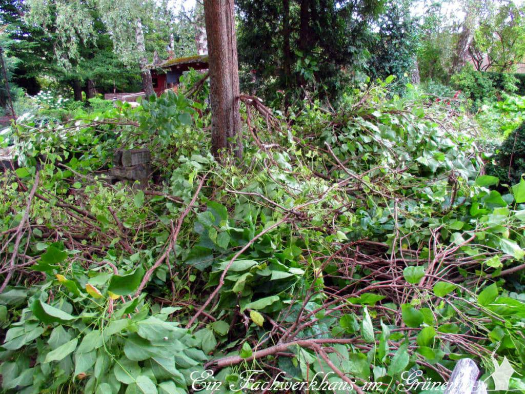 Viele Äste des Trompetenbaums liegen auf dem Rasen.