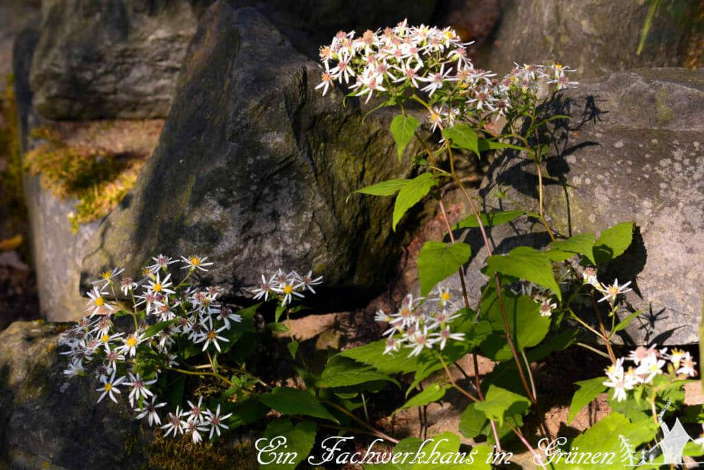 Das Licht im Herbst ist ganz besonders und zeigt den Garten aus einer anderen Perspektive.