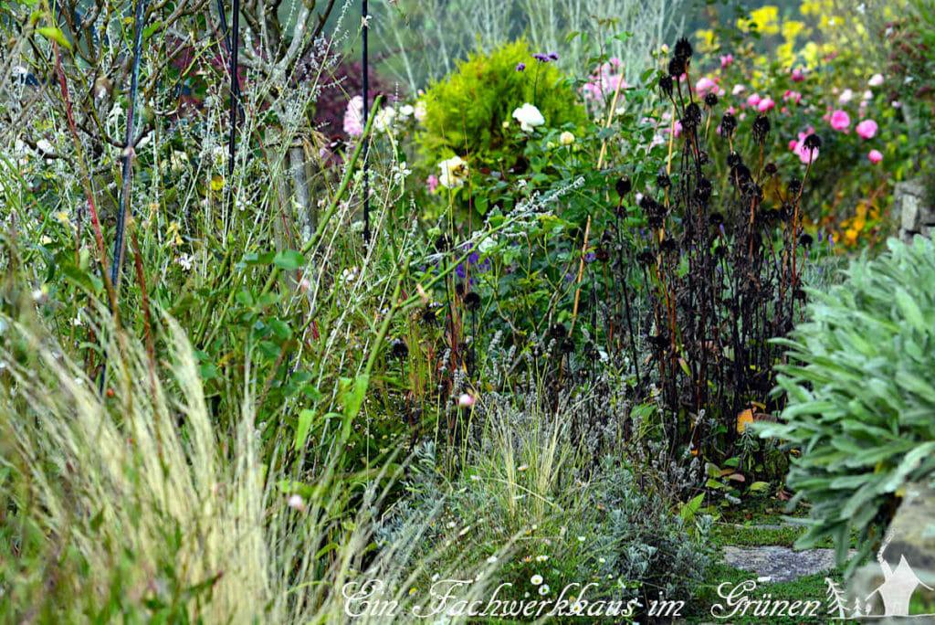 Gräser beleben den herbstlichen Staudengarten.