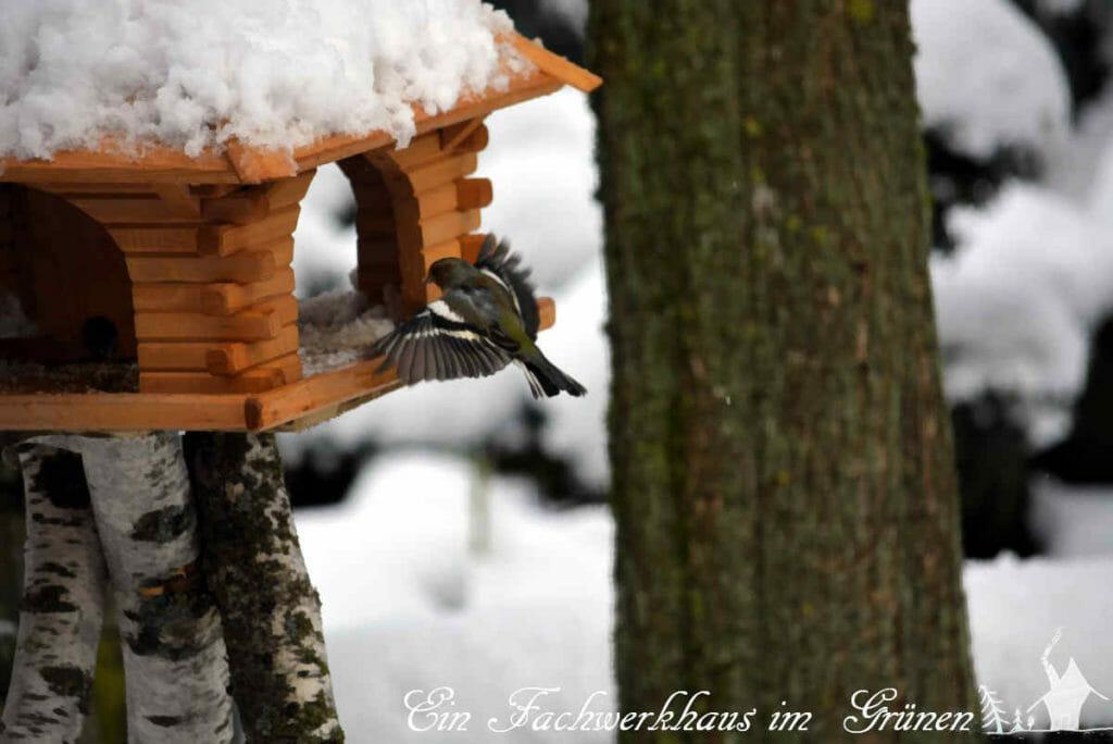 Ein Buchfink fliegt ins Vogelfutterhaus.