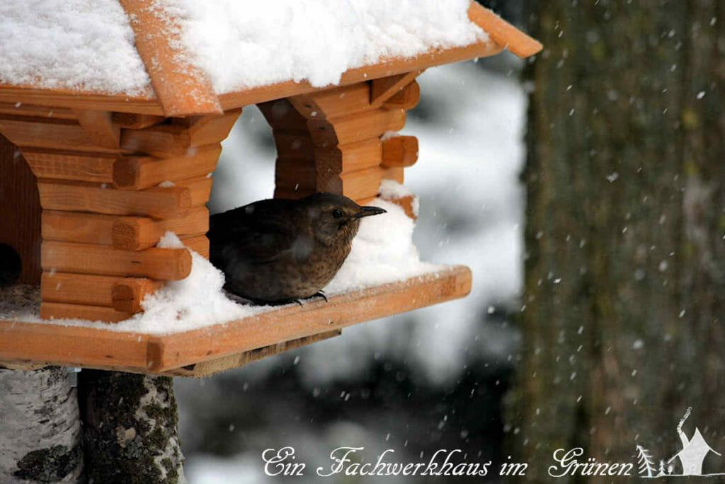 Wem es zu sehr schneit, der bleibt einfach im Haus hocken,
