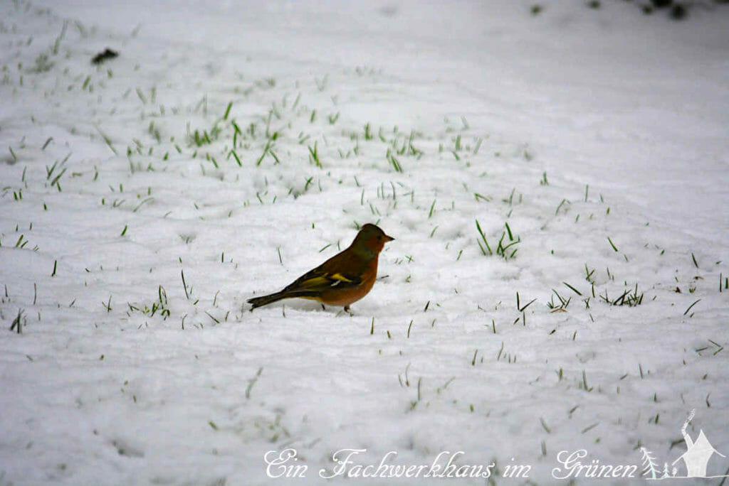 Manche Vögel suchen das Futter auch lieber im Schnee.