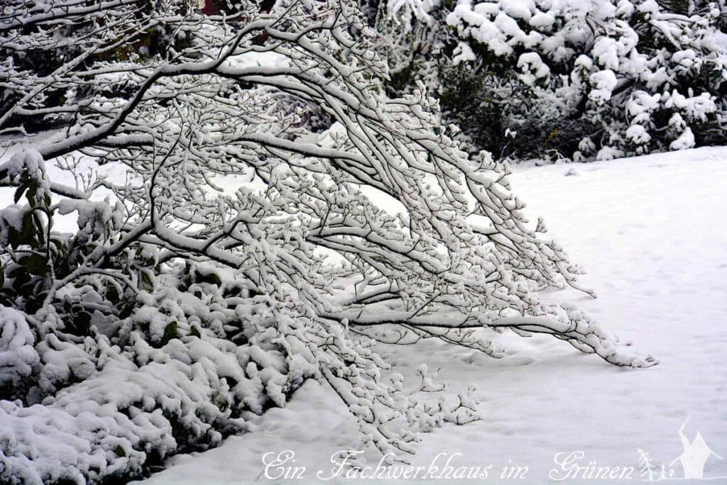 Winterwunderland im Garten, Coronawinter 2020