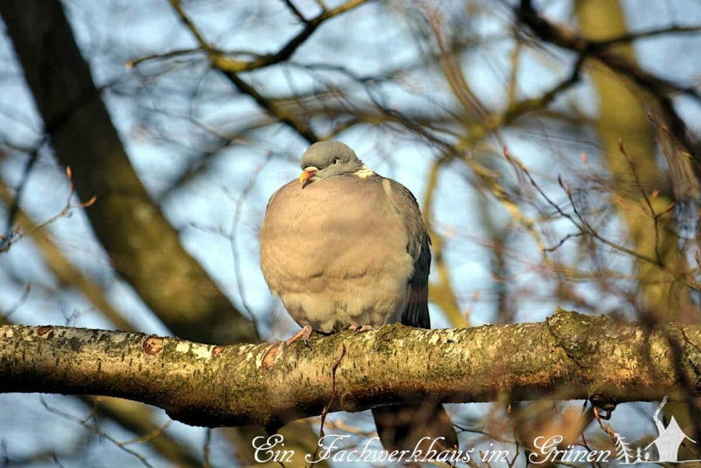 Eine Taube sitzt auf einem der Bäume.