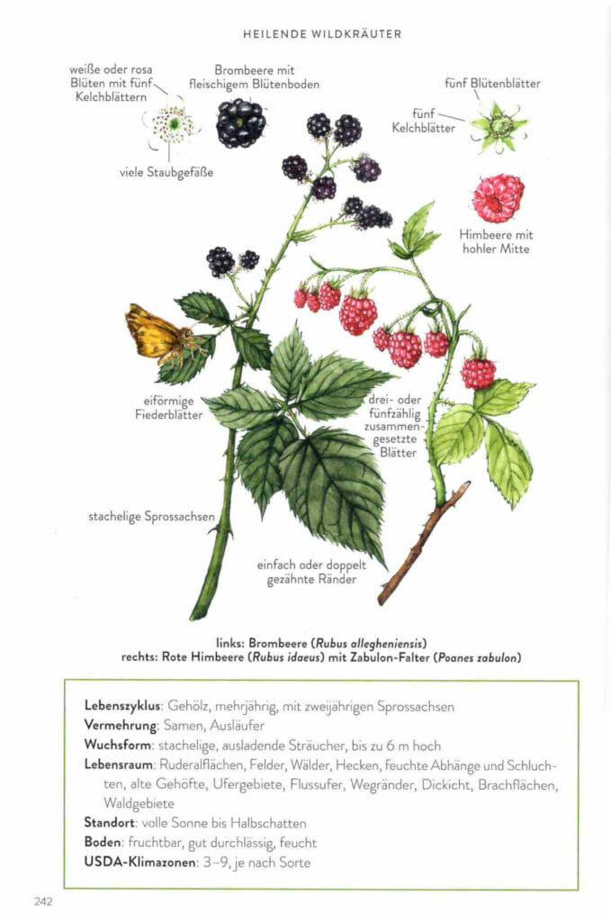Das Buch Heilende Wildkräuter bietet sehr viele und sehr schöne Illustrationen.