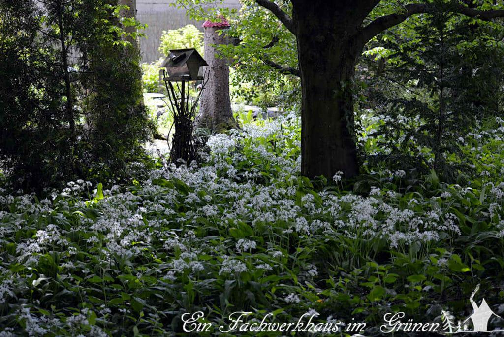 Zu einem Garten der Natur gehören auch heimische Pflanzen, hier der Bärlauch.