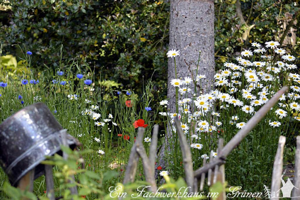 Wiesenblumen in unserem Garten.