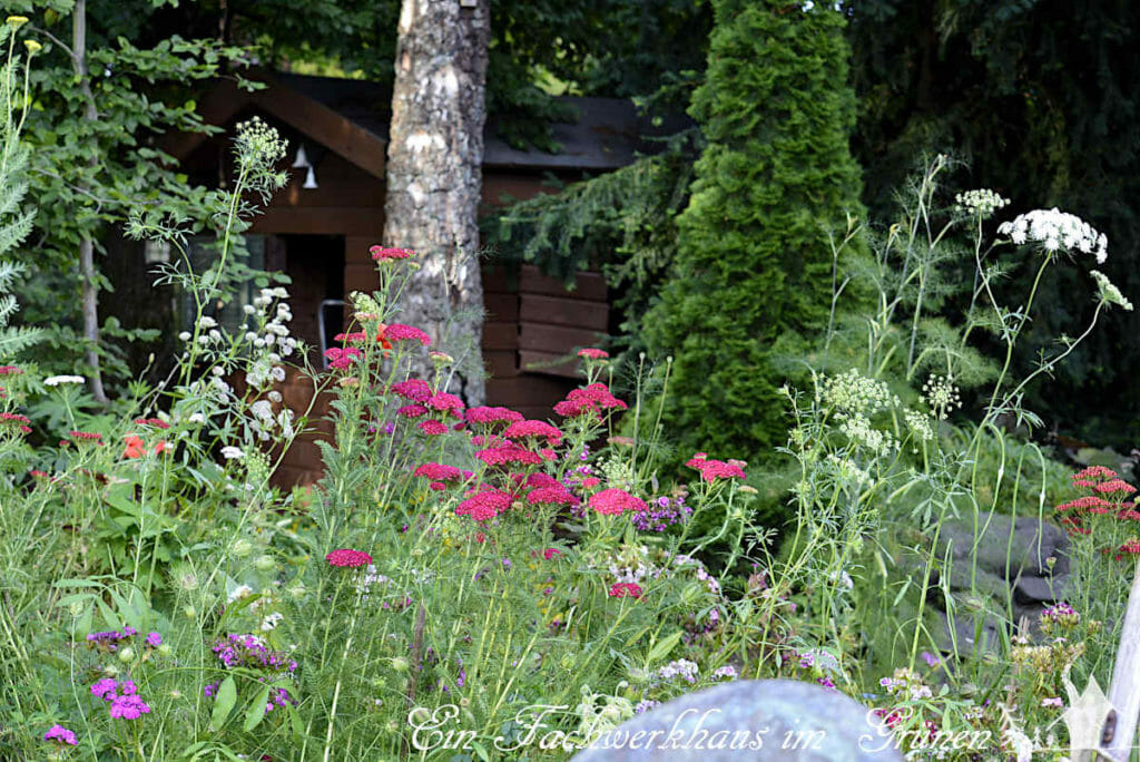 Die Insektenwiese im Garten ist eine wirklich tolle Idee.