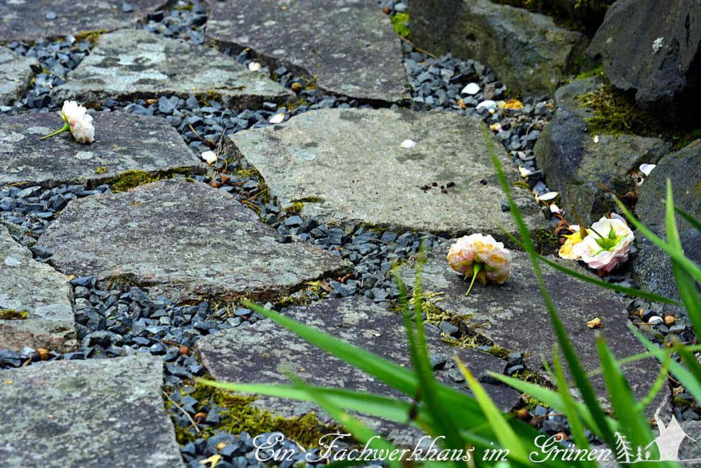 Die selbstreinigende Rose Larissa lässt ihre verwelkten Blüten einfach fallen.
