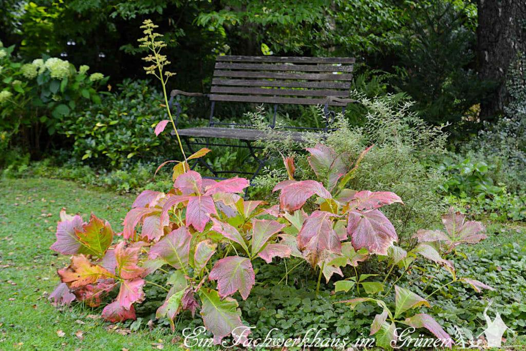 Das Schaublatt im September, Bote des Herbstes.